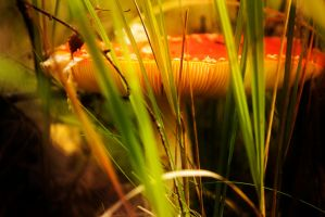 the fungus by paracats