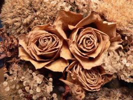 dried flowers IV by clandestine-stock