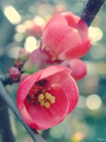 Early spring blossoms by Klytia70