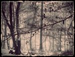 Winter Silence by Weissglut