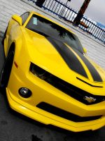Bumble Bee Replica by katie0792