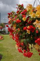 Flowers at Ferryhill Town Hall by Breezypants
