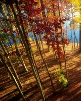 Fall at the End of the Earth by mewantsbekungfoo