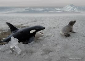 KillerwhaleAttackingSeal~Schleich by I-AmAnonymous