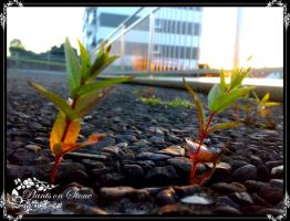 Plant on Stone by deScign