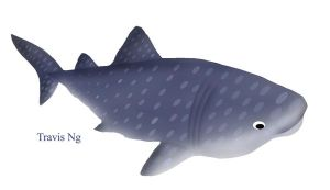 School Project: Whale Shark by EggFoYoung