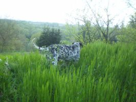 Pongo in the green by Promiseoftheraven