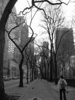 5th Avenue II by SittingOnTheFence