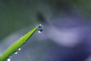 A drop of dew by AngiWallace