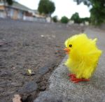 Why'd the Chicken Cross the Rd by keashie