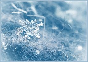 First Snowflake by farashenka