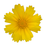 Yellow Flower II PNG by PiXasso79-Stock