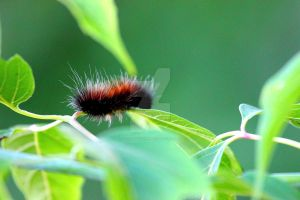 Caterpillar in Fort Frances by JordanCYork