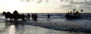Horse Rescue Ameland by Misterooo