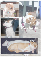 Puppy Stock Package by Noxtu-Stock