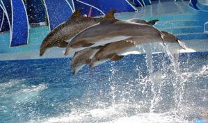 Dolphins leaping by fosspathei