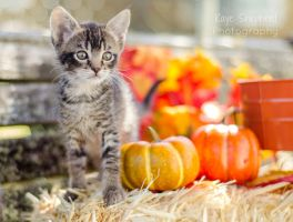Fall Kitten 3 by KayeShepherd