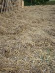 Straw and Hay by LuDa-Stock