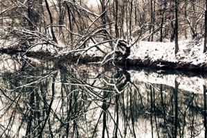 Winters Reflections by Creative--Dragon