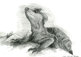 Reptile by Tigersrock144