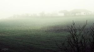 Foggy  Field by DyannaC