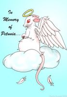 In Memory of Petunia... by chaoticdreamer