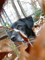 My Dog in leaves by Ben3418