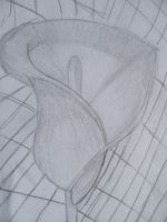 Calla Lily Pencil Sketch by LessThanThree123