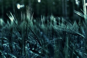 Morning Dew HDR2 by X-a-v-i-o-r