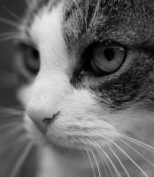 cat face by Jendranga
