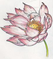 Lotus in Breeze by Bhavasindhu