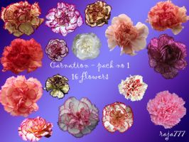 Carnation - pack 1 by raja777