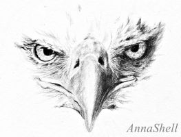 Eagle by AnnaShell