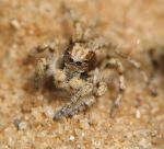3mm Spider by sapog