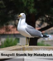 Seagulls Stock by Nataly1st