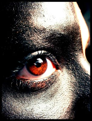 the blackest eye by rupa
