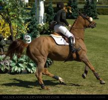 Show Jumper 3 by SalsolaStock