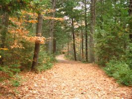 Massabesic Audubon Trails 2 by crazygardener