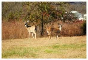 Two Deer On A Warm Autumn Day by TheMan268