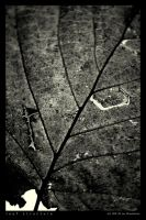 Leaf Structure by Dwor-kin