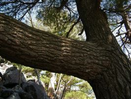 Devil's Lake- Massive Pine by iluvobiwan91