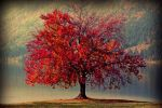 red tree by cagriozz