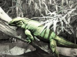 reptile by tailsxo