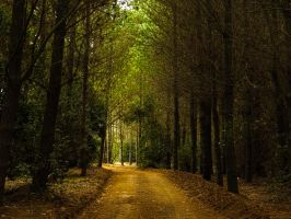 To The Roaring Trees by CastleBurh