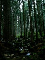 Stream in mountains II by Vrolok-stock
