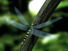 Dragonfly by DerZwilling