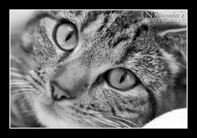 Kahnie the cat by wazabees