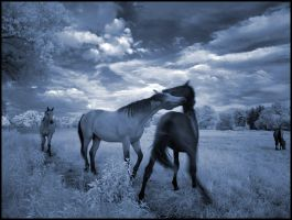 Blue Horses II... by MichiLauke