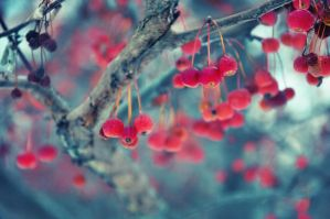 Red Berries by Luckyebbie