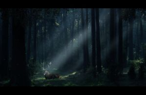 Heart of the forest by Kuldi